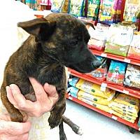 Adopt A Pet :: Gracie - Evans, GA