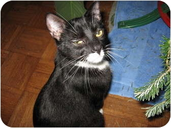 Domestic Shorthair Cat for adoption in Wakinsville, Georgia - Tramp