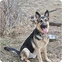 Adopt A Pet :: Lark - Hamilton, MT