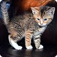 Adopt A Pet :: Gina - Xenia, OH