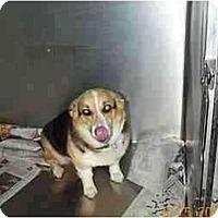 Adopt A Pet :: Chloe - Inola, OK