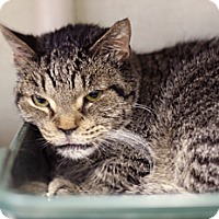 Adopt A Pet :: Bug - Chicago, IL