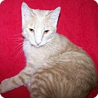 Adopt A Pet :: Hopscotch - St. Louis, MO