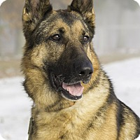 Adopt A Pet :: Addy - Wayland, MA