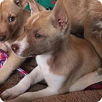 Adopt A Pet :: Tressa - Marlton, NJ