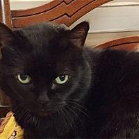 Adopt A Pet :: Miss Pixie - Durham, NC
