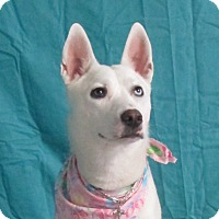 Adopt A Pet :: Crystal - LaGrange, KY
