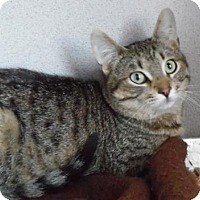 Adopt A Pet :: Gabreil - Waupaca, WI