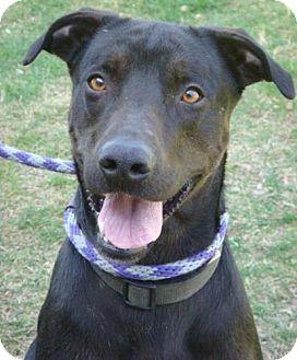 Labrador Retriever Mix Dog for adoption in Red Bluff, California - Cody