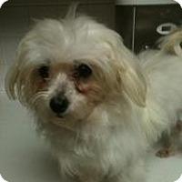 Adopt A Pet :: Daisy - Justin, TX