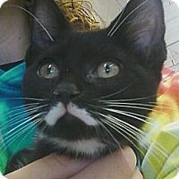 Adopt A Pet :: Abbott - Riverhead, NY