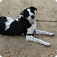 Adopt A Pet :: Petey - Vidor, TX