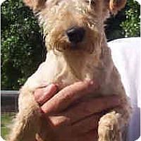 Adopt A Pet :: MILLIE - Phoenix, AZ