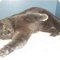 Adopt A Pet :: Galena - Lake Charles, LA