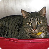 Adopt A Pet :: Chandler - Dover, OH
