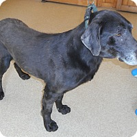 Adopt A Pet :: Brody - Oberlin, OH