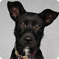 Adopt A Pet :: Marcus - Minneapolis, MN