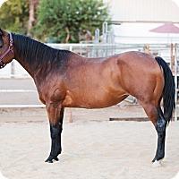 Adopt A Pet :: Kai - El Dorado Hills, CA