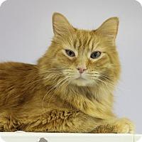 Adopt A Pet :: Loki - Medina, OH