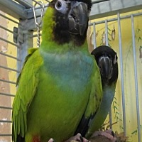Adopt A Pet :: Boaz & Ruthie - Edgerton, WI