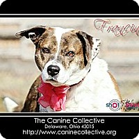 Adopt A Pet :: Francine - Delaware, OH