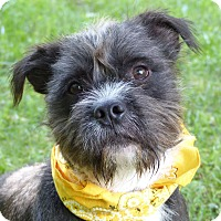 Adopt A Pet :: Benjamin Button - Mocksville, NC