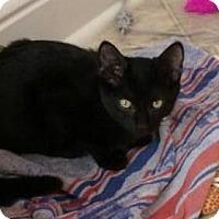 Adopt A Pet :: Rascal - Centerville, GA