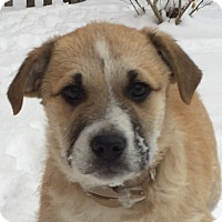 Adopt A Pet :: Pfeffernussen - Mt. Prospect, IL
