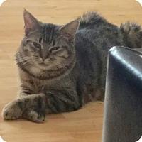 Adopt A Pet :: Turmeric - Brooklyn, NY