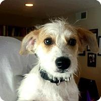 Adopt A Pet :: Winston - Dana Point, CA