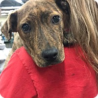 Adopt A Pet :: Tawny - Fresno, CA