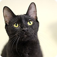 Adopt A Pet :: Laertes - Chicago, IL