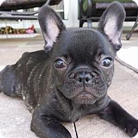 Adopt A Pet :: Paris Frances - Fort Lauderdale, FL