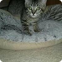 Adopt A Pet :: Ranger - Port Republic, MD