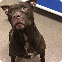 Adopt A Pet :: 1-2 Jerry - Triadelphia, WV