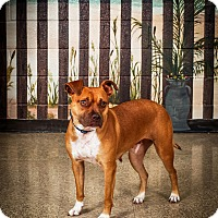Adopt A Pet :: Coco - Jacksonville, FL