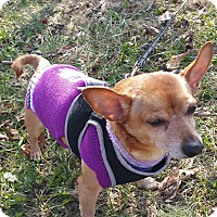 Adopt A Pet :: Chico - LaGrange, KY