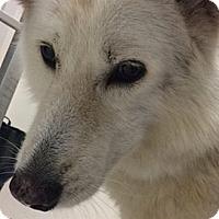 Adopt A Pet :: Daisy - Key Largo, FL