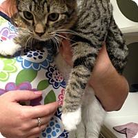 Adopt A Pet :: TinkerBell - Putnam Hall, FL