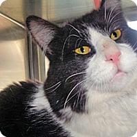 Adopt A Pet :: 344093 - Wildomar, CA