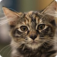 Adopt A Pet :: Hurricane - Alexandria, VA