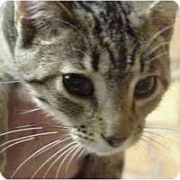 Adopt A Pet :: Wren (M) - Chesapeake, VA