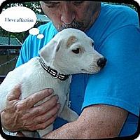 Adopt A Pet :: DERBY- - Franklinton, NC