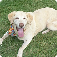 Adopt A Pet :: Koda- reduced fee - Plainfield, CT