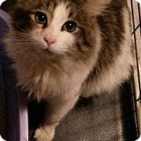 Adopt A Pet :: Romeo the Lover! - McDonough, GA