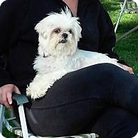Adopt A Pet :: Luke - Lorain, OH