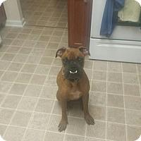 Adopt A Pet :: Roscoe - Springfield, MO