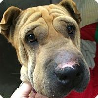 Adopt A Pet :: Charlotte - Barnegat Light, NJ