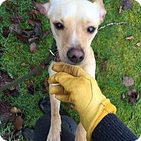 Adopt A Pet :: Clark - Surrey, BC