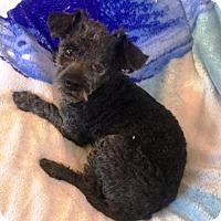 Adopt A Pet :: Rolo - Murrieta, CA